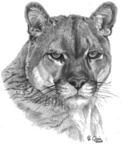 cougarlogo